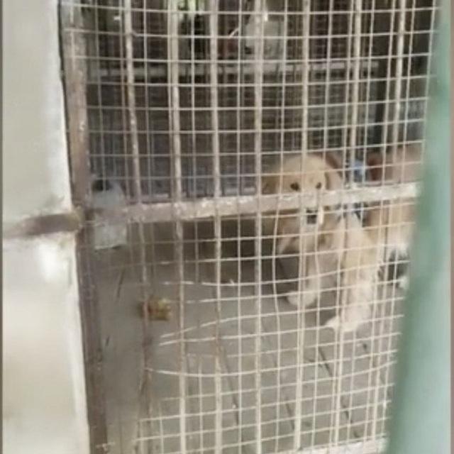Vườn thú treo đầu dê bán thịt chó: Nhốt chó vào chuồng lừa khách là sư tử - 2