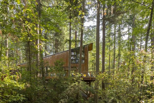Nhà đối xứng năng lượng mặt trời ẩn mình giữa rừng linh sam - 3