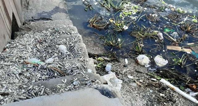 Kinh hãi  dòng nước thải đen ngòm tuồn thẳng ra sông - 2