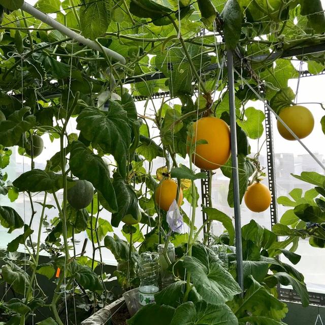 Rau trái trĩu trịt như nông trại trên vườn sân thượng ở Đà Nẵng - 8