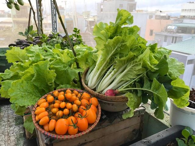 Rau trái trĩu trịt như nông trại trên vườn sân thượng ở Đà Nẵng - 4