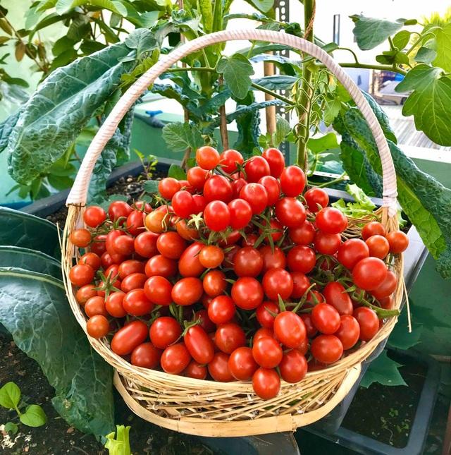 Rau trái trĩu trịt như nông trại trên vườn sân thượng ở Đà Nẵng - 6
