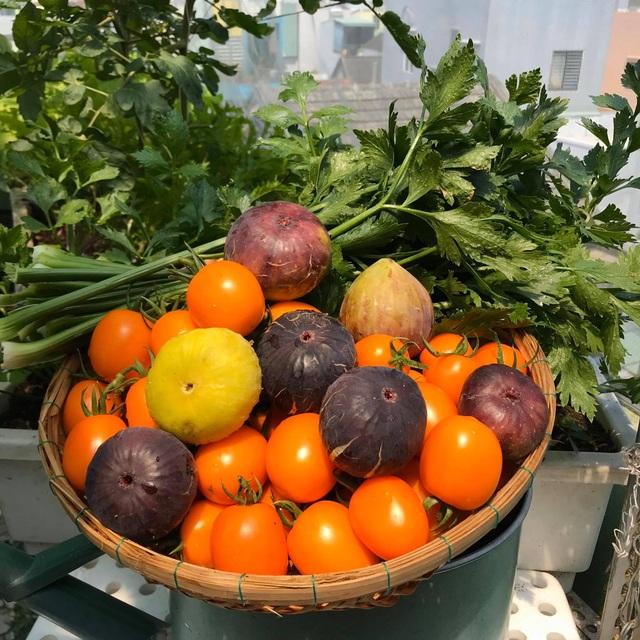 Rau trái trĩu trịt như nông trại trên vườn sân thượng ở Đà Nẵng - 9