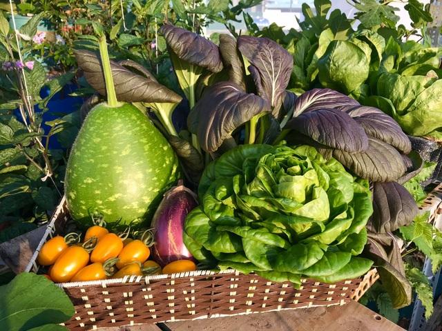 Rau trái trĩu trịt như nông trại trên vườn sân thượng ở Đà Nẵng - 5