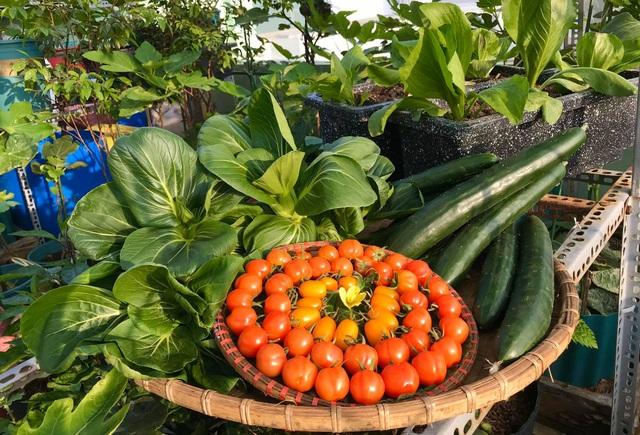 Rau trái trĩu trịt như nông trại trên vườn sân thượng ở Đà Nẵng - 10
