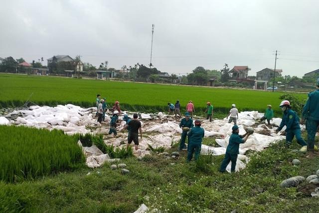 Hàng chục người giải cứu 25 tấn dưa hấu tắm bùn dưới ruộng - 1