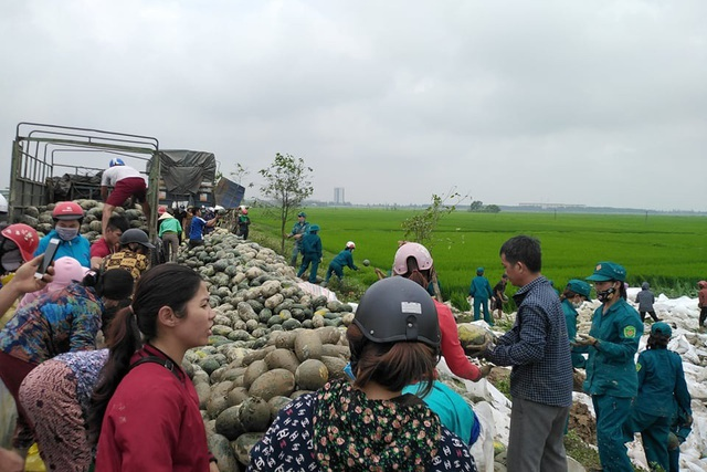 Hàng chục người giải cứu 25 tấn dưa hấu tắm bùn dưới ruộng - 3