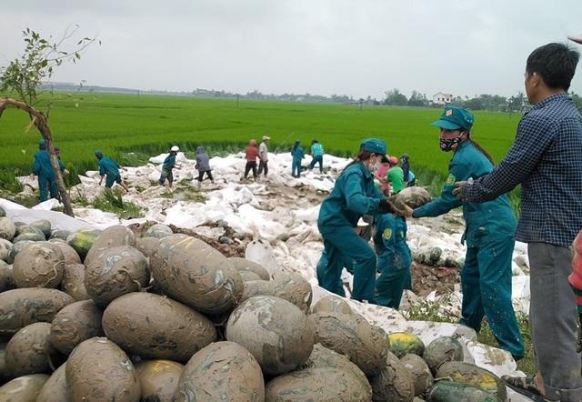 Hàng chục người giải cứu 25 tấn dưa hấu tắm bùn dưới ruộng - 2