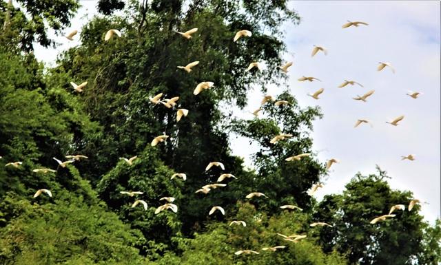 Đến Mỹ Lý chúng ta sẽ bắt gặp những hình ảnh thật tuyệt vời trên bầu trời vào hai buổi sáng, chiều khi các bầy chim đi kiếm mồi vào buổi sáng và về trú ngũ vào buổi chiều thật là lý tưởng.