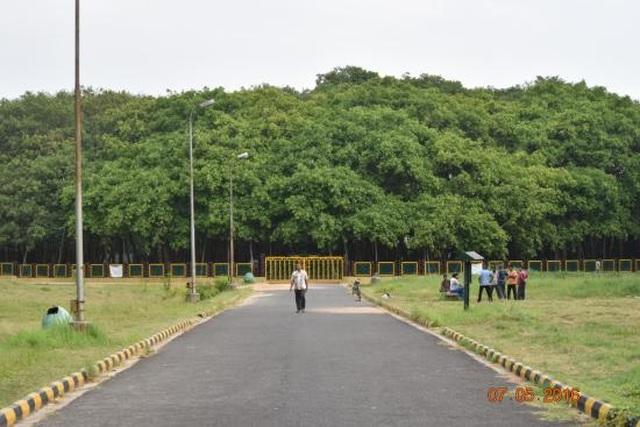 Cây đa khổng lồ nhất thế giới tuổi đời 250 năm, tán cây phủ rộng 14.000 m2 - 1
