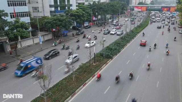 Hàng phong lá đỏ khô héo ở Hà Nội trước giờ bị khai tử - 6
