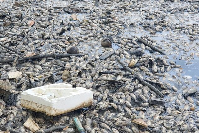 Cả chung cư khốn đốn vì hàng ngàn con cá chết bốc mùi nồng nặc - 2