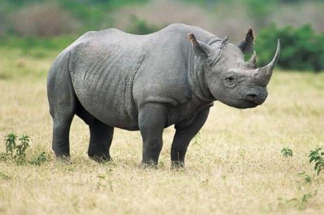Những niềm tin lệch lạc khiến động vật hoang dã tuyệt chủng - 1