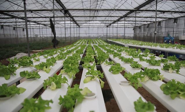 Trồng rau bằng smartphone, chị nông dân đều tay thu tiền tỷ - 1