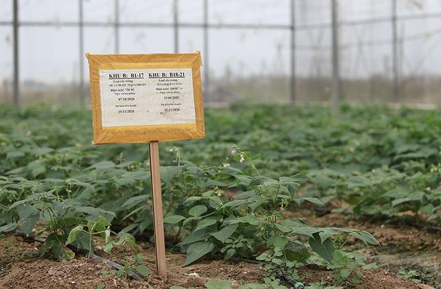 Trồng rau bằng smartphone, chị nông dân đều tay thu tiền tỷ - 5