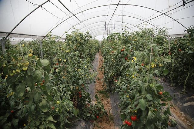 Trồng rau bằng smartphone, chị nông dân đều tay thu tiền tỷ - 7