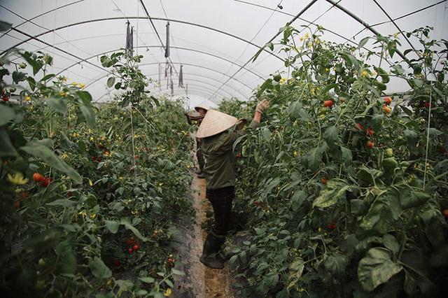 Trồng rau bằng smartphone, chị nông dân đều tay thu tiền tỷ - 8