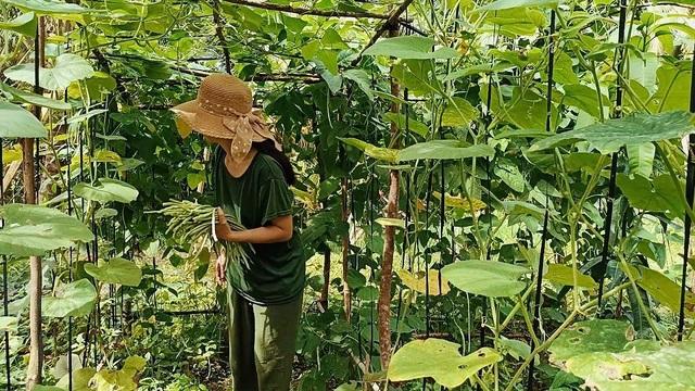 Cô gái bỏ phố về quê làm khu vườn 500m2 tràn ngập rau trái ở Bến Tre - 15