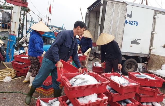 Thiếu lao động đi biển, nhiều tàu cá phải nằm bờ - 3