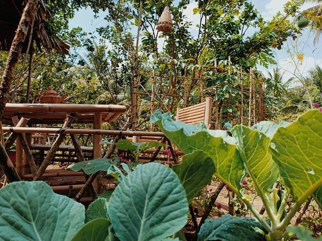 Cô gái bỏ phố về quê làm khu vườn 500m2 tràn ngập rau trái ở Bến Tre - 4