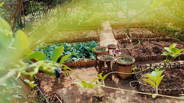 Cô gái bỏ phố về quê làm khu vườn 500m2 tràn ngập rau trái ở Bến Tre - 6