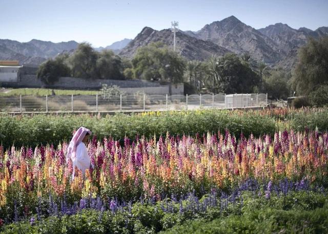 Nhân viên ngân hàng về hưu tạo vườn hoa rực rỡ giữa mảnh đất nắng, gió - 1