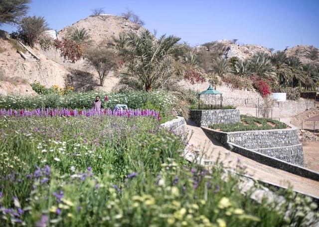 Nhân viên ngân hàng về hưu tạo vườn hoa rực rỡ giữa mảnh đất nắng, gió - 2