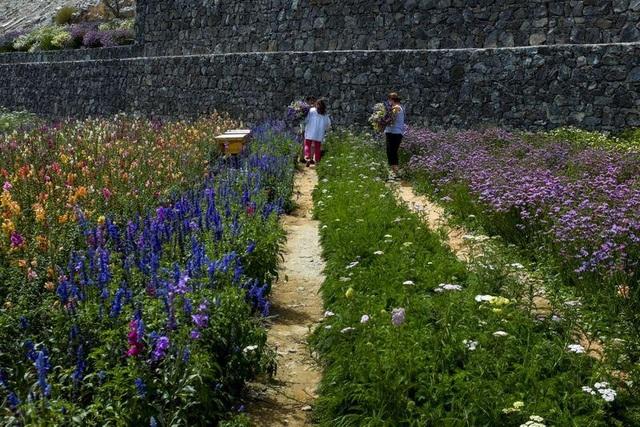 Nhân viên ngân hàng về hưu tạo vườn hoa rực rỡ giữa mảnh đất nắng, gió - 7