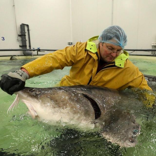 Bí mật nơi nông dân nuôi cá làm ra đặc sản thượng hạng hàng trăm triệu/kg - 1