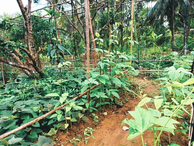 Cô gái bỏ phố về quê làm khu vườn 500m2 tràn ngập rau trái ở Bến Tre - 5