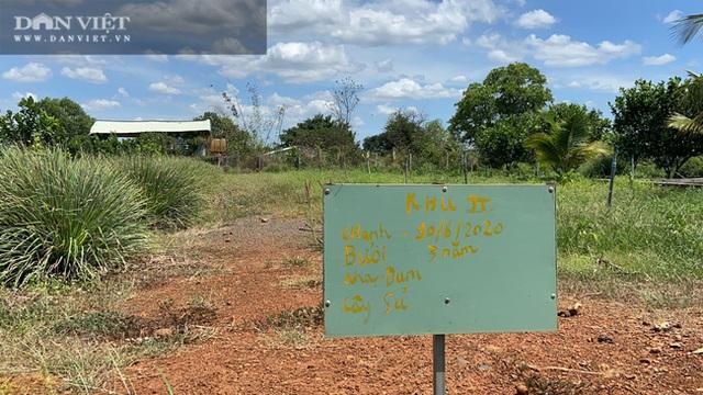 Đồng Nai: Chàng trai bỏ phố về quê trồng chanh, chỉ vặt lá bán cũng thu tiền tỷ - 2