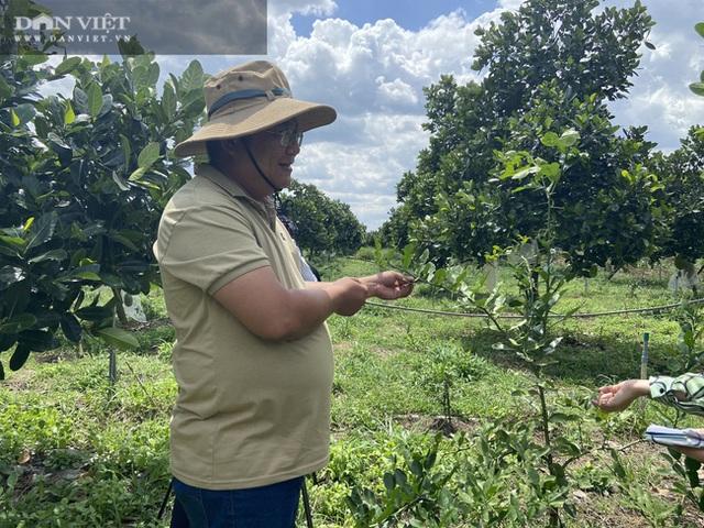 Đồng Nai: Chàng trai bỏ phố về quê trồng chanh, chỉ vặt lá bán cũng thu tiền tỷ - 6