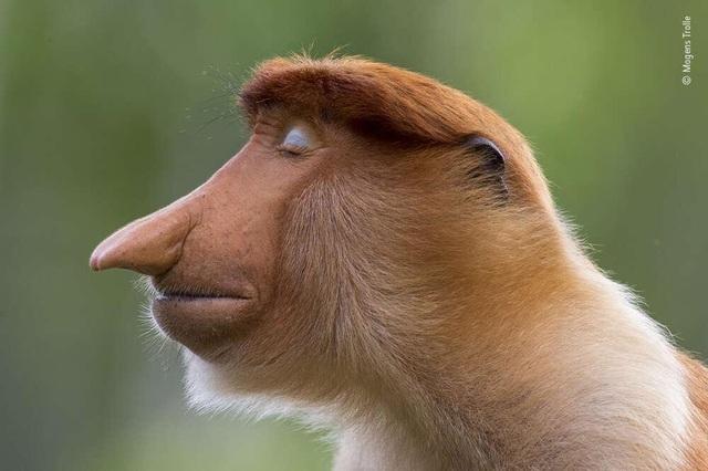 Hài hước khoảnh khắc khỉ sử dụng máy ảnh như nhiếp ảnh gia chuyên nghiệp - 2