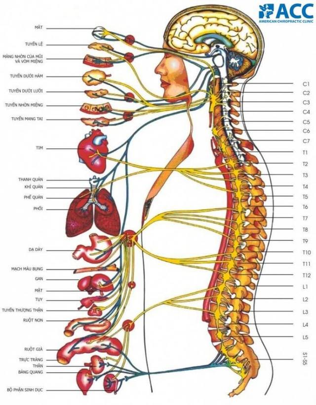 Phương pháp Chiropractic điều trị đau cơ xương khớp - 1