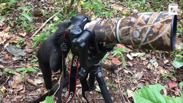 Hài hước khoảnh khắc khỉ sử dụng máy ảnh như nhiếp ảnh gia chuyên nghiệp - 1