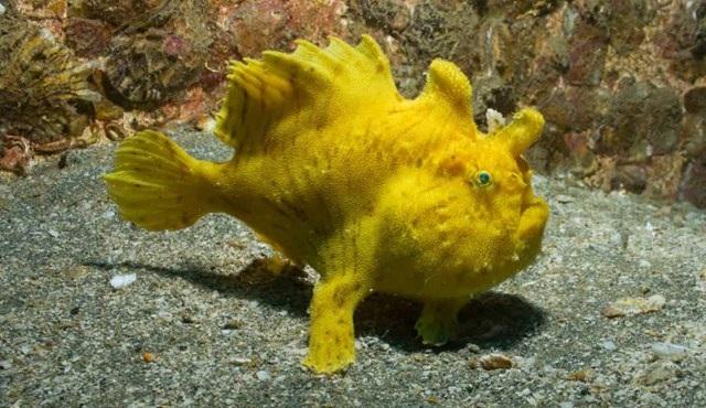 Sự thật đáng kinh ngạc về các sinh vật dưới biển sâu - 1