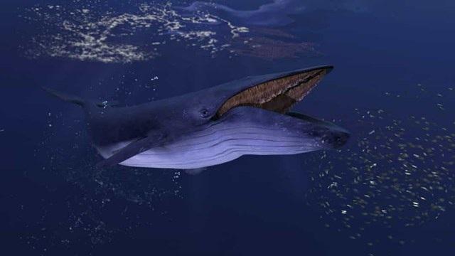 Sự thật đáng kinh ngạc về các sinh vật dưới biển sâu - 5