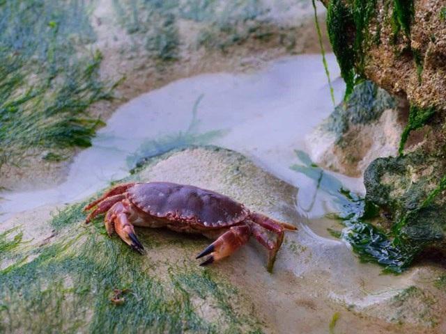 Sự thật đáng kinh ngạc về các sinh vật dưới biển sâu - 6