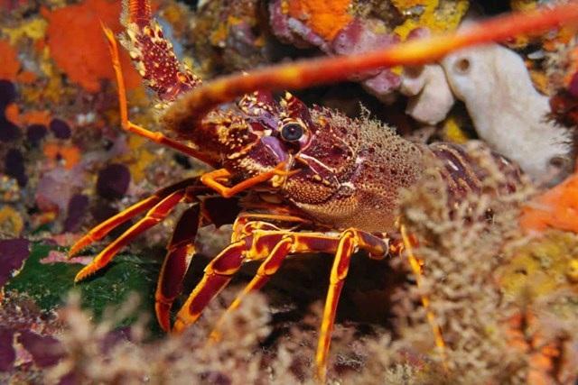 Sự thật đáng kinh ngạc về các sinh vật dưới biển sâu - 7