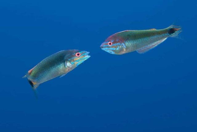 Sự thật đáng kinh ngạc về các sinh vật dưới biển sâu - 9