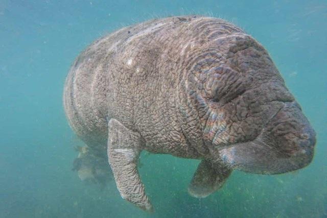 Sự thật đáng kinh ngạc về các sinh vật dưới biển sâu - 13