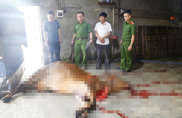 Bắt quả tang chủ lò mổ mua bò đã chết ở vùng dịch về xẻ thịt - 1