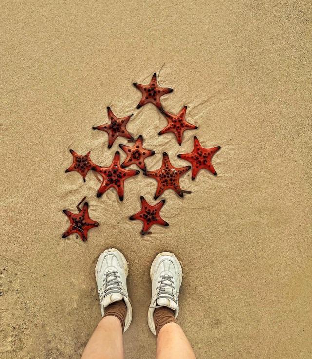 Sao biển ở Phú Quốc chết khô do du khách mang lên bờ chụp ảnh sống ảo - 2
