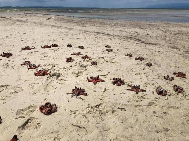 Sao biển ở Phú Quốc chết khô do du khách mang lên bờ chụp ảnh sống ảo - 1