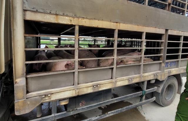 Bắt quả tang chủ lò mổ mua bò đã chết ở vùng dịch về xẻ thịt - 2