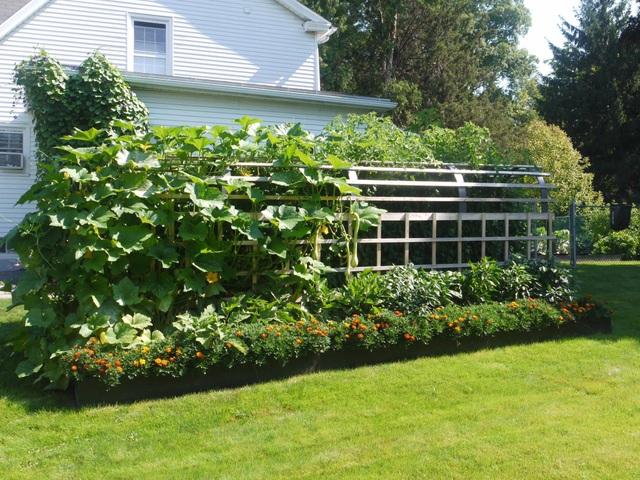 Biến đất quanh nhà thành vườn ngập cây trái khiến hàng xóm cũng trầm trồ - 1