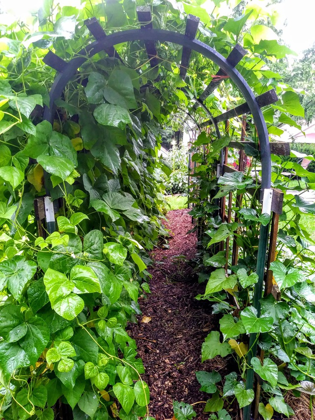 Biến đất quanh nhà thành vườn ngập cây trái khiến hàng xóm cũng trầm trồ - 5