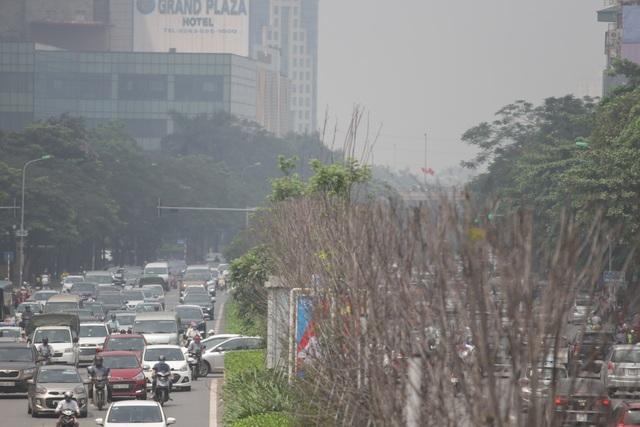 Hàng phong lá đỏ thất thủ ở Hà Nội, tiêu tan giấc mộng trời Âu - 4