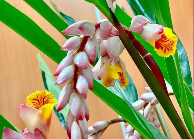 Hoa dại bờ bụi siêu đắt đỏ, mối buôn bán 2.000 cành/ngày - 3