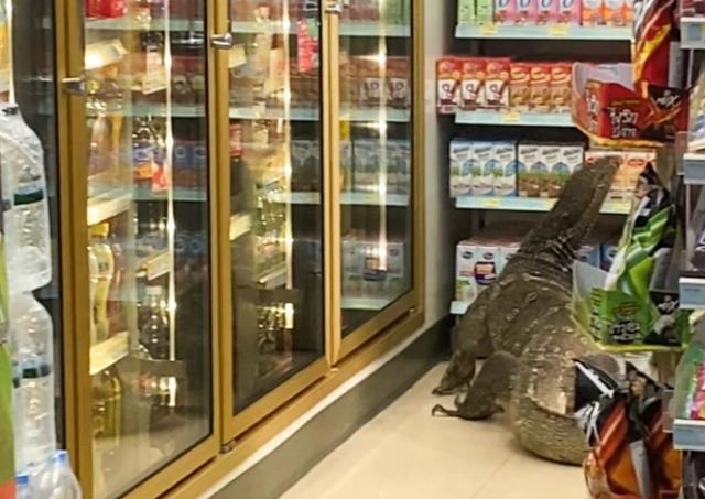 Sốc cảnh thằn lằn khổng lồ leo trèo trong cửa hàng tạp hóa như trong phim - 3